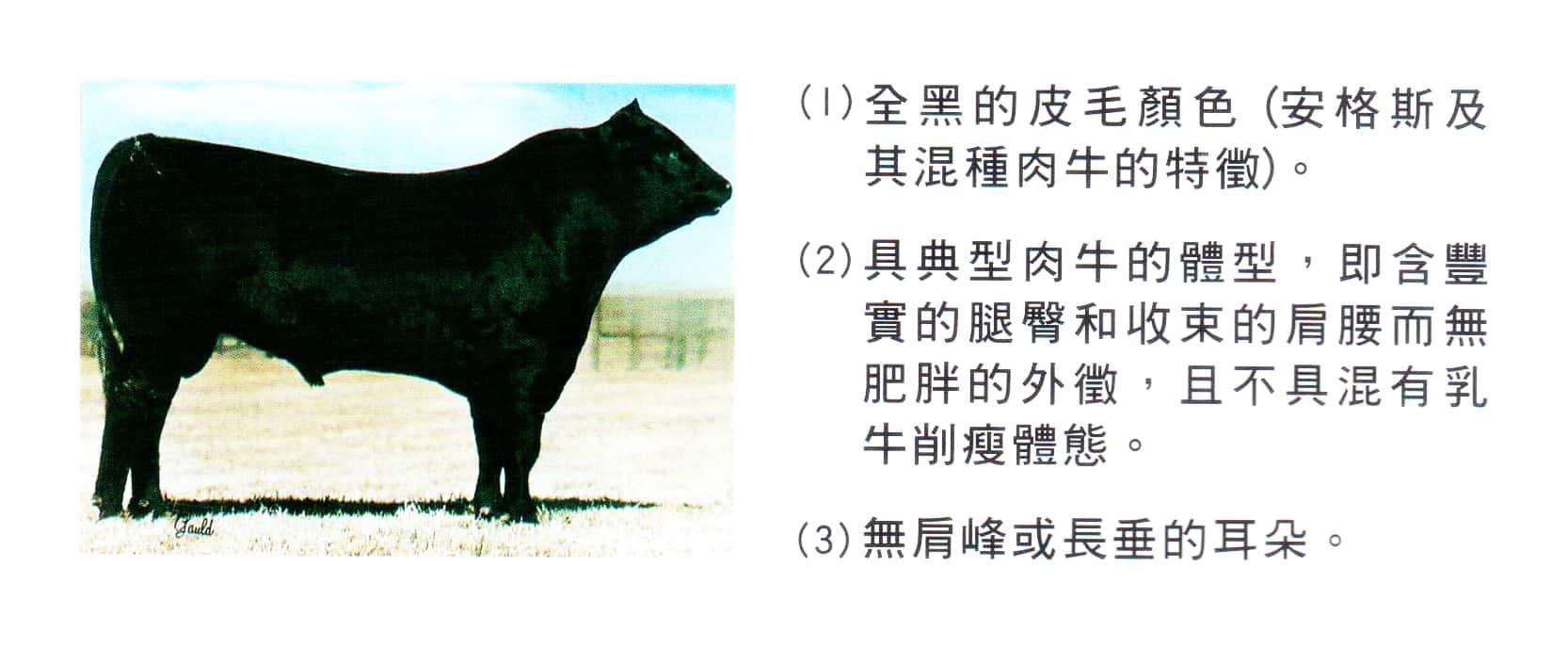 牛肉解說03
