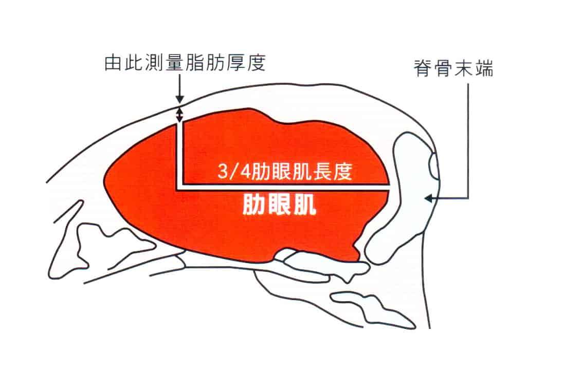 肋眼肌01